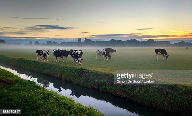 Cows Grazing On Countryside Landscape