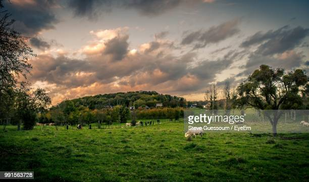 Cows Grazing On Field Against Cloudy Sky