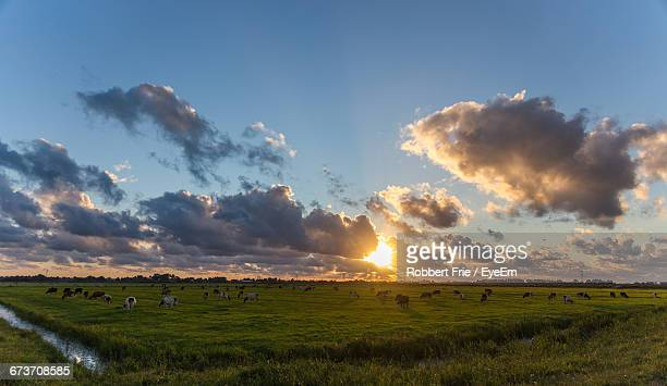 Cows Grazing On Field Against Sky