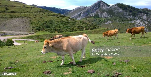 Cows Grazing On Grassy Field Against Sky