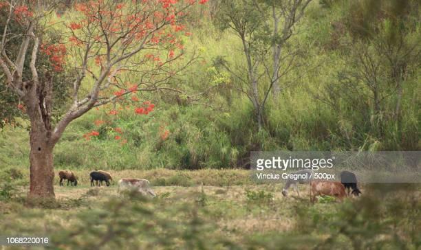 cows grazing on meadow - gregnol fotografías e imágenes de stock