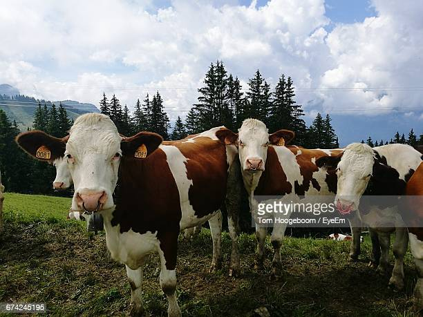 Cows On Field Against Cloudy Sky