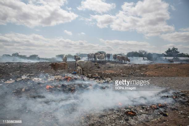 Cows seen grazing amid burning rubbish in the refugee camp. Dadaab is one of the largest refugee camps in the world. More than 200,000 refugees live...