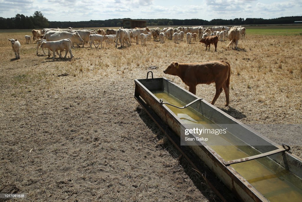 Government Considers Aid To Drought-Affected Farmers : News Photo