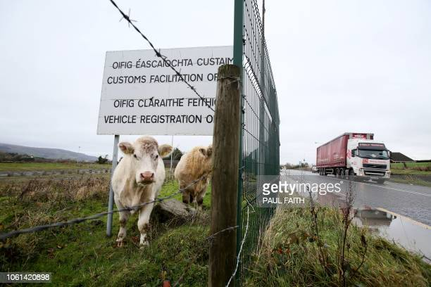 Cows stand under a sign got a disused Irish border vehicle registration and customs facilitation office outside Dundalk Ireland on November 14 2018...