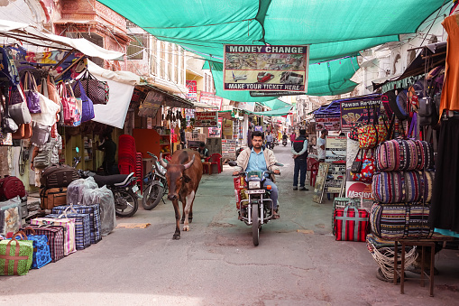 cows walking freely among people and vehicles through the streets of Pushkar 1271555102