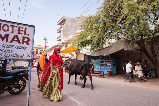 cows walking freely among people and vehicles through the streets of Pushkar 1271555248