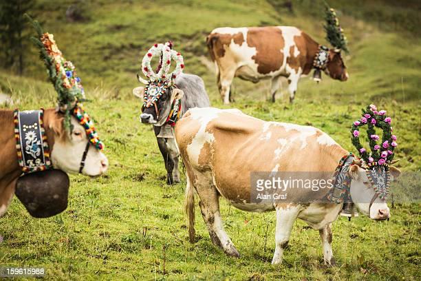 Cows wearing headdresses in grassy field