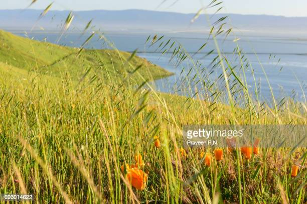 coyote hills regional park, fremont - east bay regional park stock pictures, royalty-free photos & images