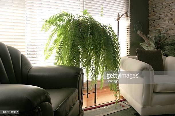 cozy armchairs in living room - varen stockfoto's en -beelden