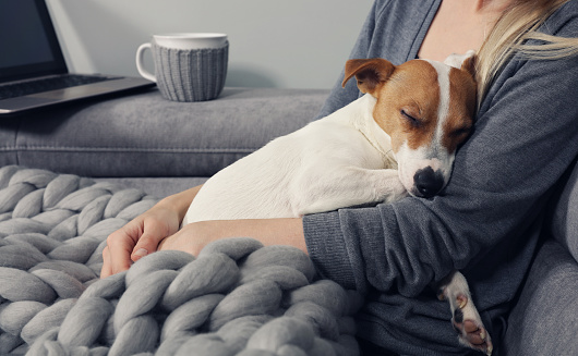 Cozy home, woman covered with warm blanket watching movie, hugging sleeping dog. Relax, carefree, comfort lifestyle. 923465404