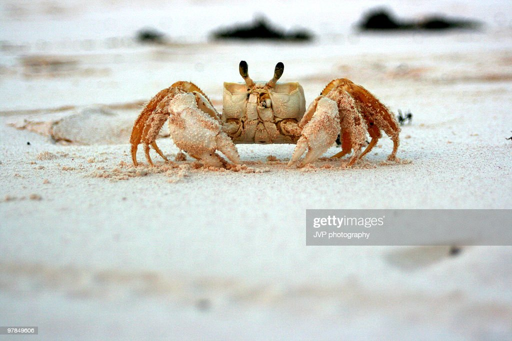 Crab at the beach : Stock Photo