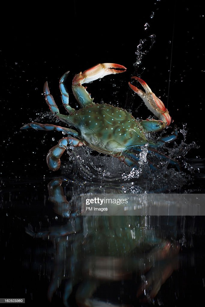 Crab bursting out of water : Stock Photo