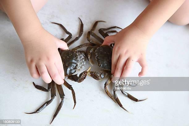 Crab fight