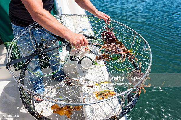 crab fishing - powerofforever stock pictures, royalty-free photos & images
