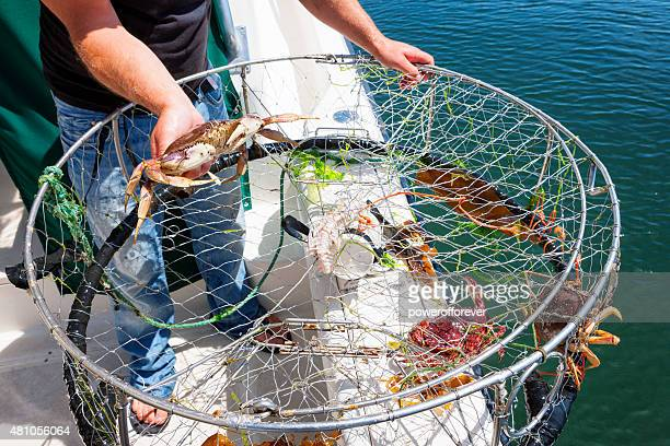 crab fishing - crab pot stock photos and pictures