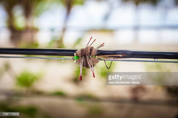 Crab fly on a fly-fishing rod in Belize
