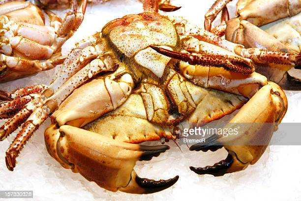 crab on ice - crushed ice stock pictures, royalty-free photos & images
