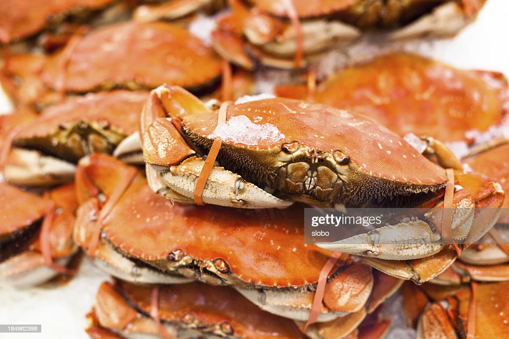 Crab On Ice : Stock Photo