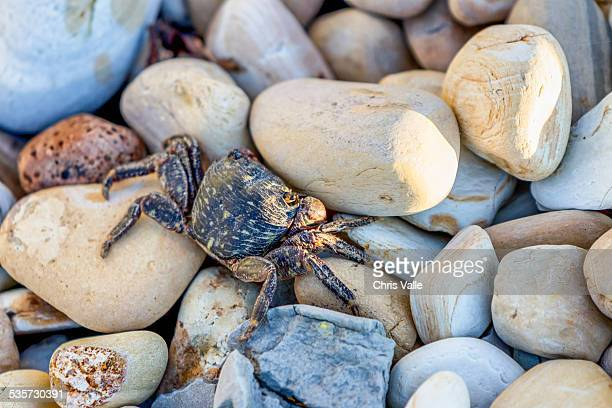 crab on the rocks - rancho palos verdes stock pictures, royalty-free photos & images