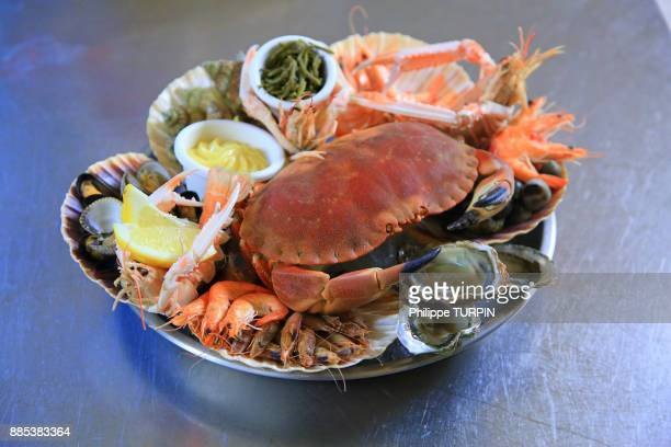 crab - crab seafood stock photos and pictures