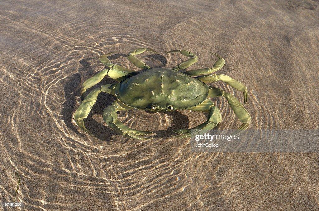 Crab : Stock Photo