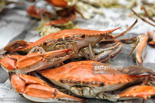 crab season - crab stock photos and pictures