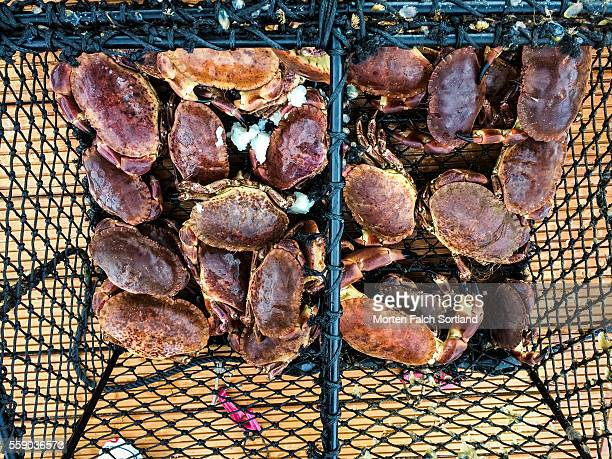crab trap - crab pot stock photos and pictures
