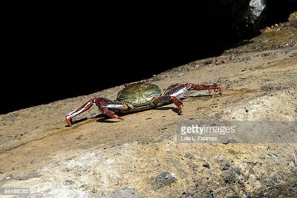 Crab walking