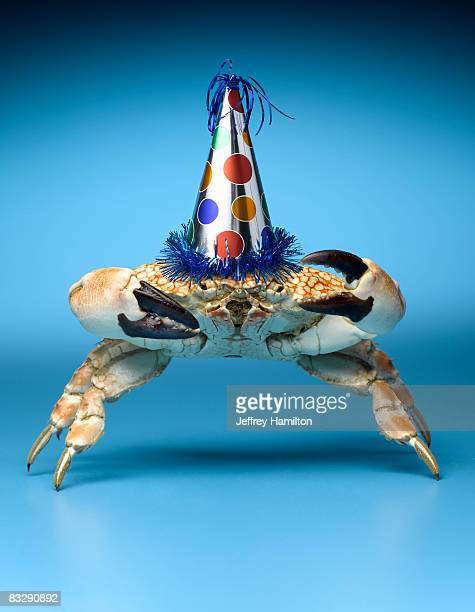 Crab wearing birthday party hat