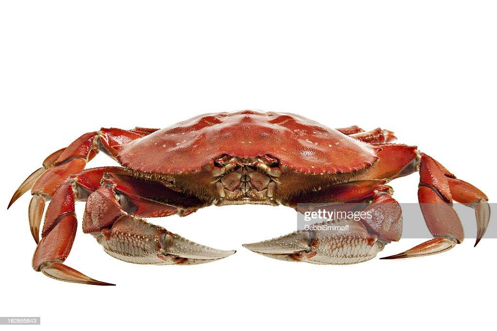 Crab Whole : Stock Photo
