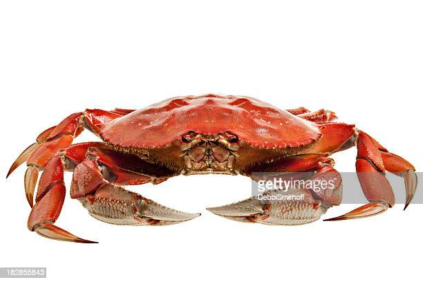 crab whole - boiled stock pictures, royalty-free photos & images