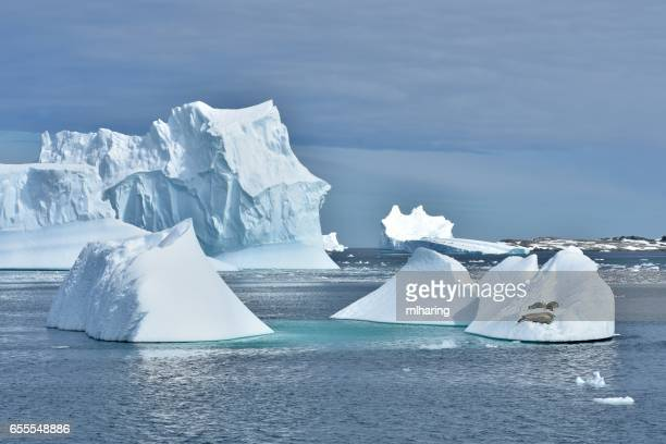 Crabeater Seals and Icebergs
