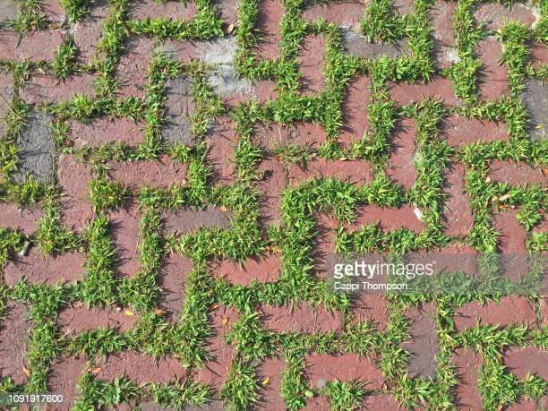crabgrass pest plant growing between cracks of pavers - crabgrass stock pictures, royalty-free photos & images