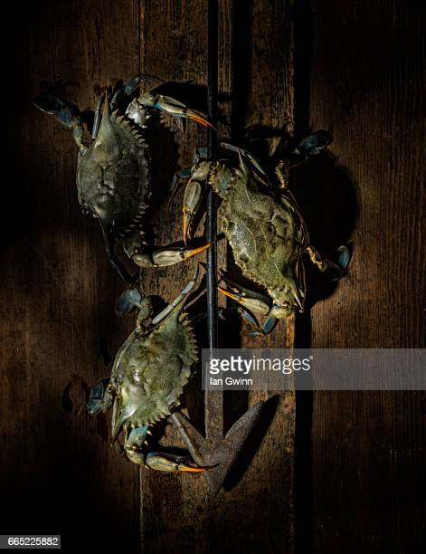 crabs and harpoon - ian gwinn - fotografias e filmes do acervo