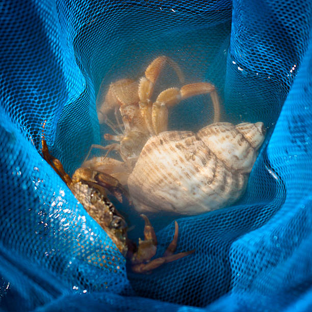 Crabs And Shells In A Blue Fishing Net Wall Art