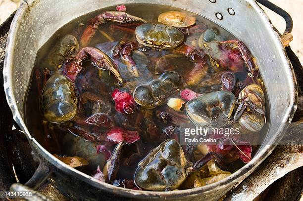 Crabs boiling alive on beach