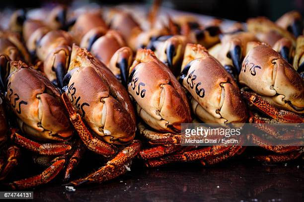 crabs on market stall for sale - bridlington stock pictures, royalty-free photos & images
