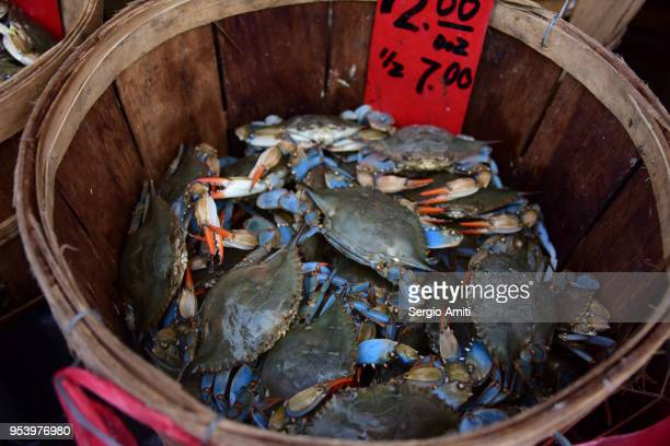 crabs on sale in a wooden basket - blue crab stock photos and pictures