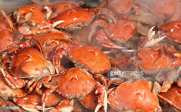 crabs - crab stock photos and pictures
