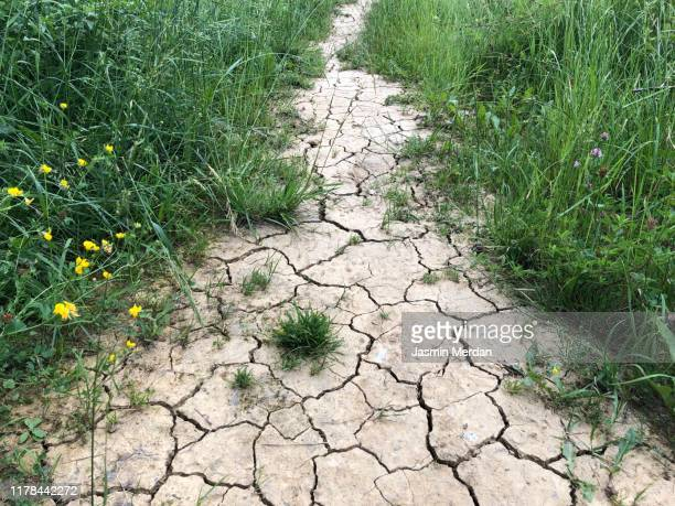 crack and dry ground at grass field - climate stock pictures, royalty-free photos & images
