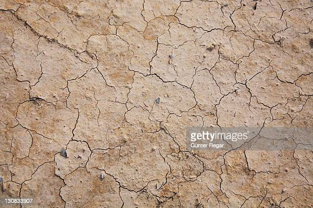 crack growth in the dry loamy ground - loam stock photos and pictures