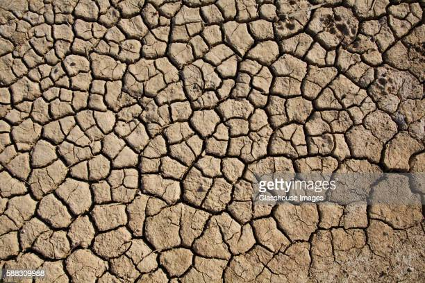 Cracked and Dry Desert Ground, High Angle View