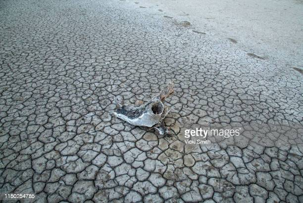 cracked dirt and parched soil - climate change stock pictures, royalty-free photos & images
