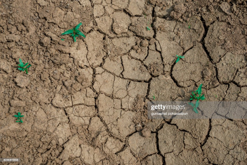 Cracked Dried Dirt : Stock Photo
