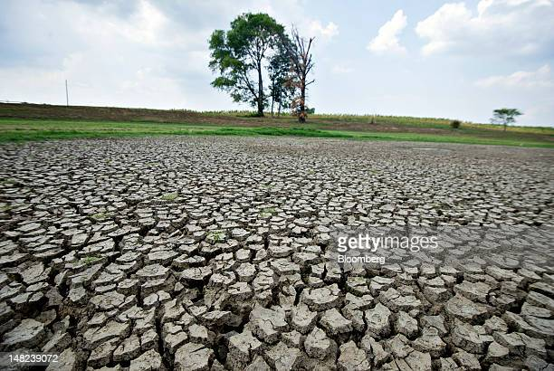 Cracked dry ground is seen where a pond normally stands on the property of Ray Mercer in Crossville Illinois US on Wednesday July 11 2012 Mercer said...