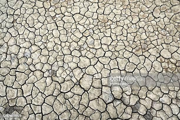 Cracked mud in the desert