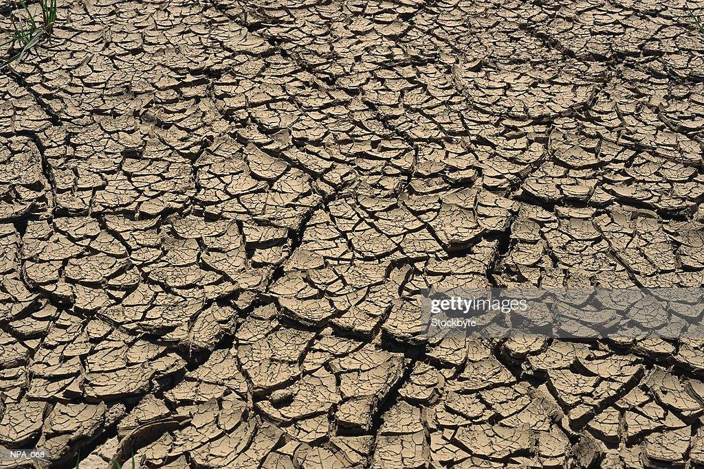 Cracked mud : Foto de stock