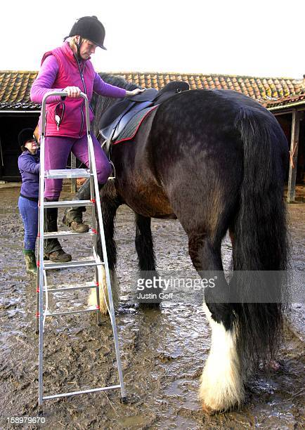 Cracker The 125 Ton 192 Hands Horse At His Home In Spilsby Lincolnshire The PureBred Shire Horse Often DoublesUp As A Local Tour Bus Dragging...