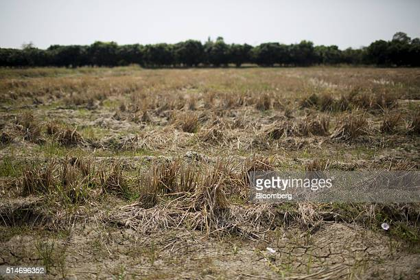 Cracks appear in a barren rice field in the Sangkaburi district of Chainat province Thailand on Tuesday Feb 23 2016 The government in Thailand...